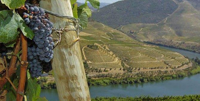 Portugal Wine Douro valleyWine Region