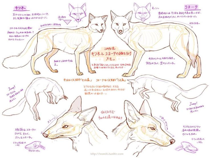 16 best Animal References images on Pinterest | Drawing reference ...