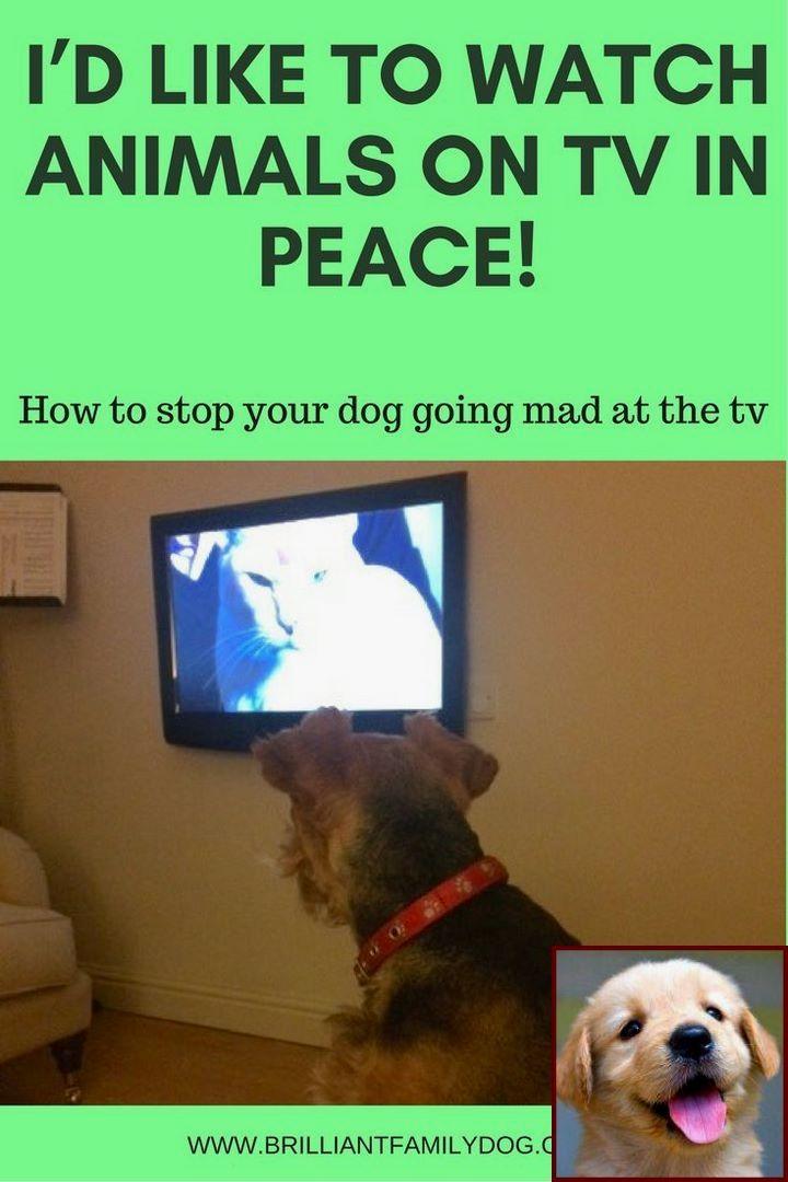 Yorkie Dog Behavior And Clicker Training Dog To Shake Dog