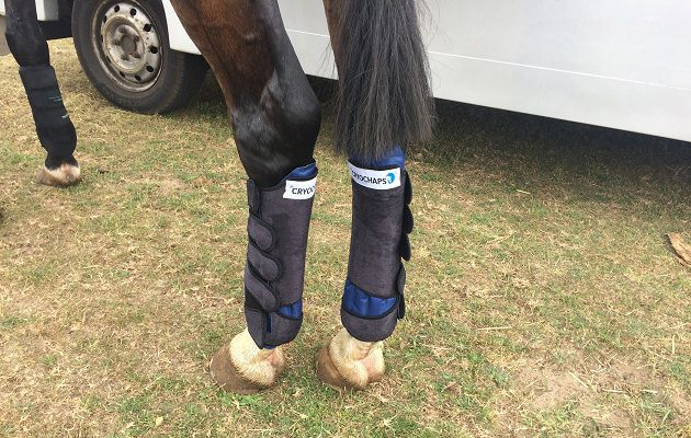 If you're looking for a pair of cooling wraps for your horse, then you need to read this review