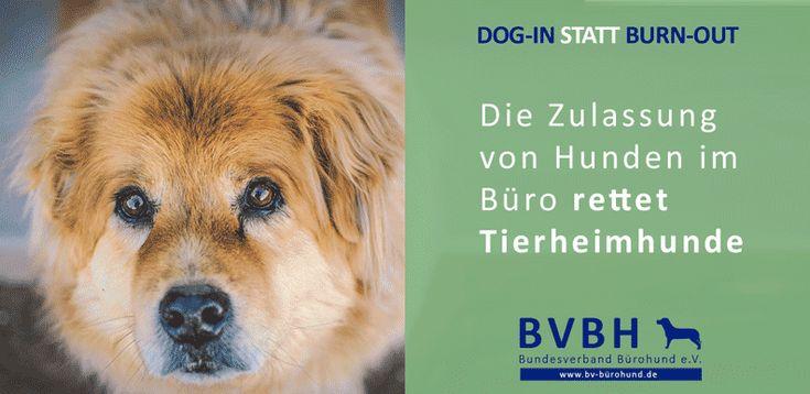 Infocard: Bürohund - Rettet Tierheimhunde
