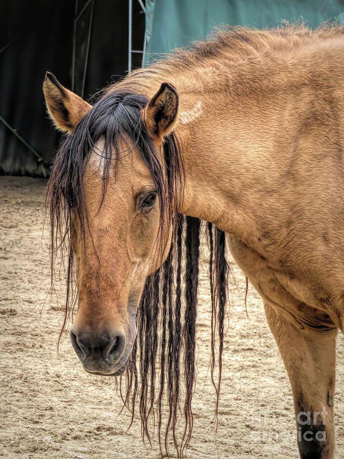 Bay Mustang by Elisabeth Lucas – Horses