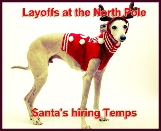 82 Best Dog Christmas Cards Images On Pinterest Dog