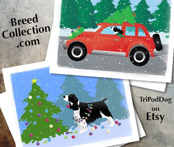 Newfoundland Dog Christmas Cards