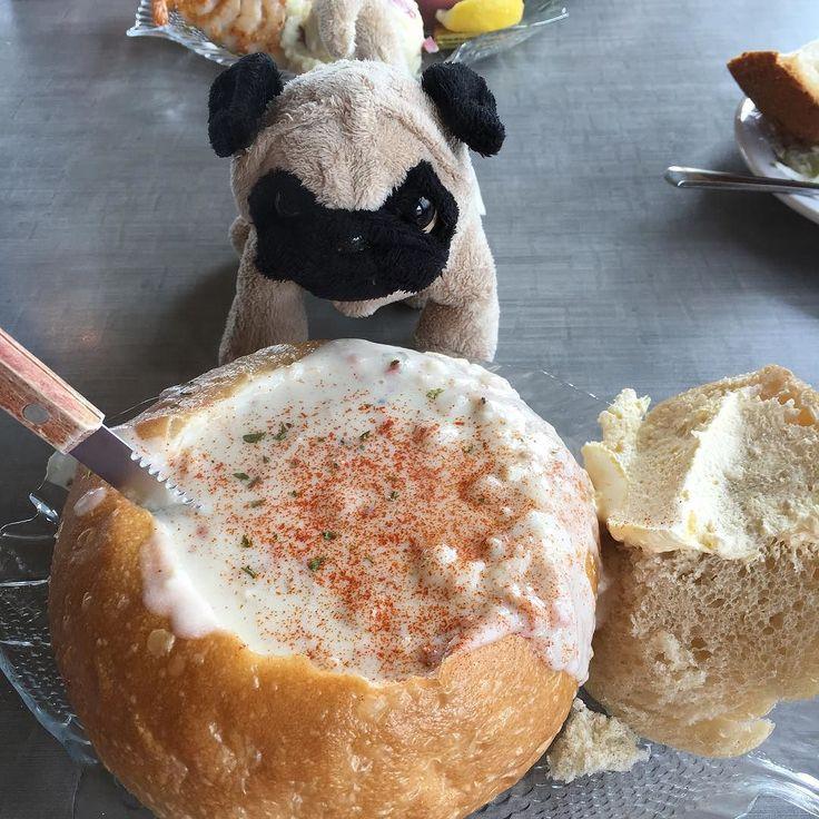 Mr. Pug and clam chowder in a sourdough bread bowl! At Mo's in Lincoln City, Oregon. 🍲🍤🍞  #pug #pugly #pugsofinstagram #travel #oregoncoast #coast #chowder #food #foodporn #mrpug #cute #coastal #seafood #bread #sourdough #bowl #clamchowder #dogs #foodie #foodlover #puglife #travelling #travelblogger #lincolncity #oregon #pacificnorthwest #pnw #pacificcoast #mo #restaurant http://ift.tt/1Tt2lAf