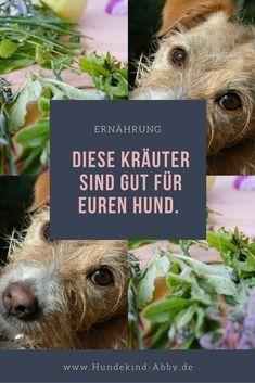 #Hund #Hunde #Kräutergarten #Hundepfote #Pfote #Wissenswert #Hundgesund #Hundeliebe #Hundeblog #Hundeblogger