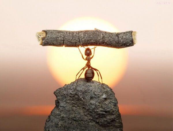 Photo prise au moment parfait, fourmi, soleil