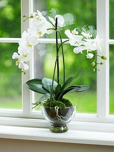 Orchidea in coppetta di vetro