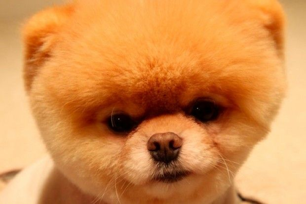 Smelly Dogs May Need Ablutions: Adorable Photos, Little Puppies, Cutest Dogs, Teddy Bears, Boos The Dogs Birthday, Birthday Boos, Baby Bears, Little Dogs, Cute Dogs