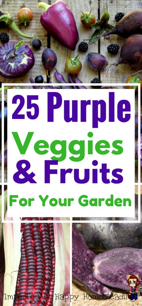 25 purple vegetables and fruits you should be growing in your garden! Beautiful to grow and health benefits too!