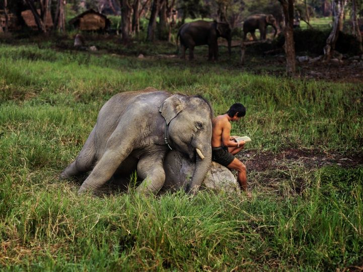 ThailandFriends, The Jungles Book, Art Prints, Thailand Elephant, Stevemccurry, Reading Buddy, Steve Mccurry, Travel Photography, Animal