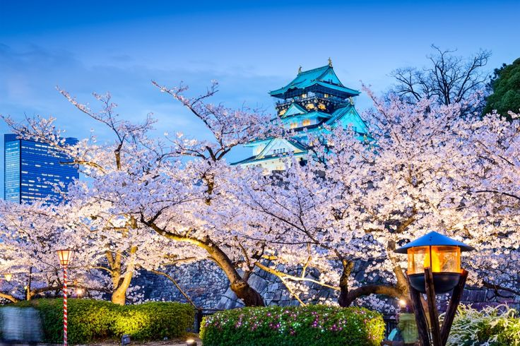 12 magical photos of cherry blossoms