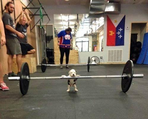 Hondje wil gewichtheffen