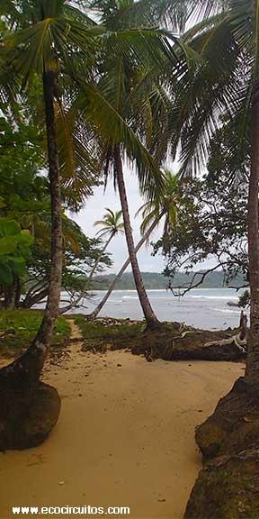Isla Bastimentos, Bocas del Toro  www.ecocircuitos.com