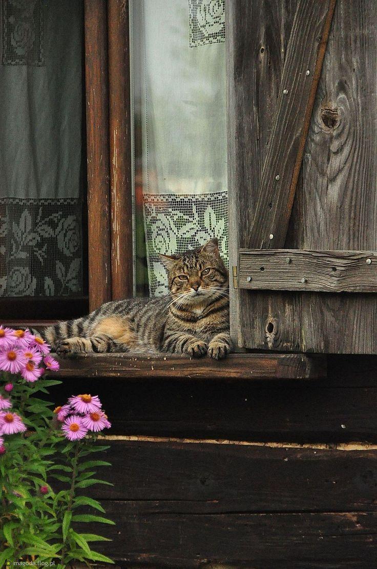 La vie des humains est peut ªtre intéressente mais la vie des chats