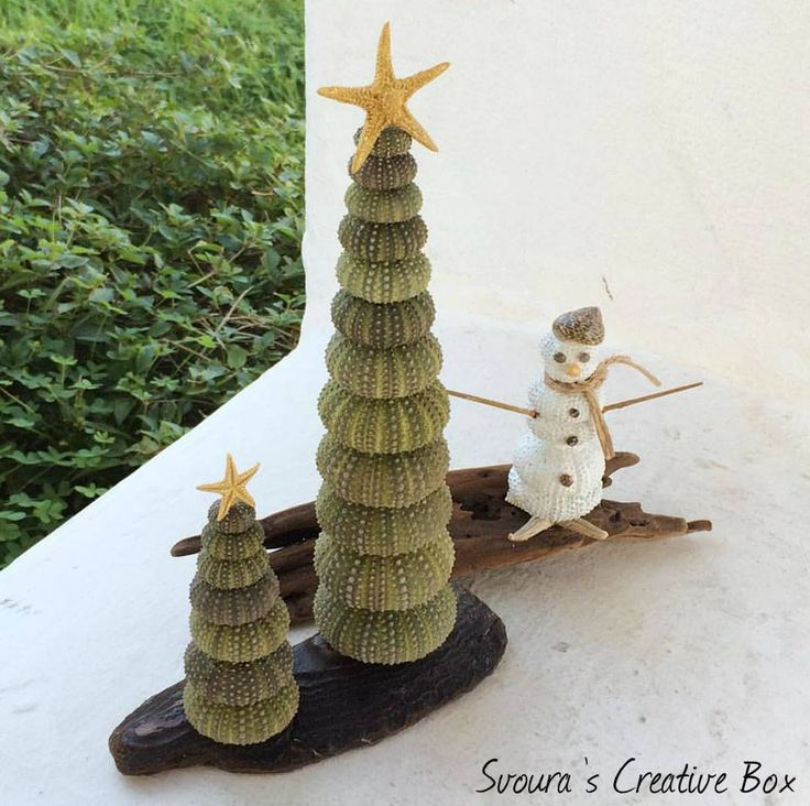 Christmas Decoration with Sea Urchins! Use sea materials to decorate your space for Christmas!
