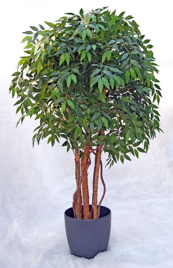 palmukasvit - Google-haku
