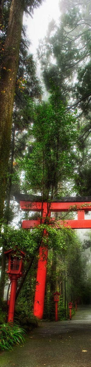 The Rainy Forest in Hakone