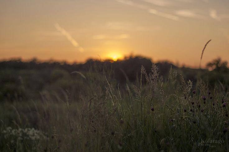 sunrise by kofaragozsuzsiphotos  www.facebook.com/kofaragozsuzsiphotos