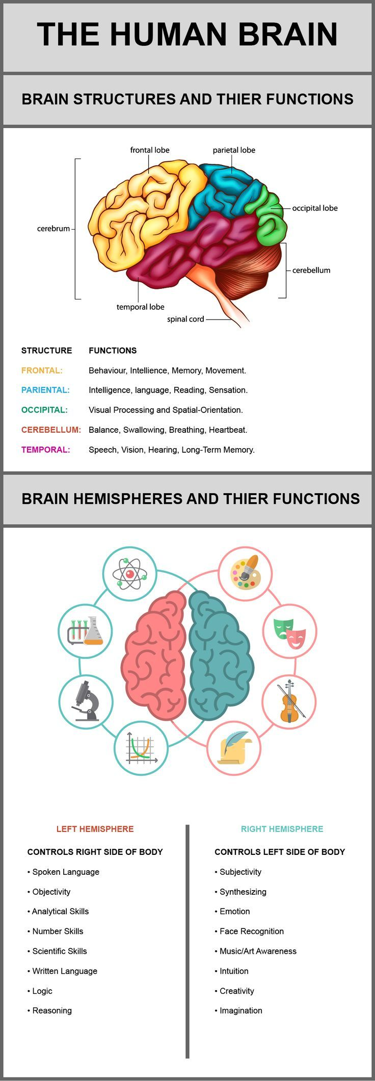 This infographic discusses each of the following structures of the brain and their functions: Frontal Lobe, Parietal Lobe, Occipital Lobe, Cerebellum and Temporal Lobe. It also discusses the right and left hemispheres of the brain and what they are responsible for controlling.