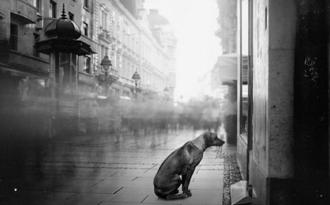 J'ai perdu mon #animal ! Que faire ? #chien #chat #dog #cat #nacs