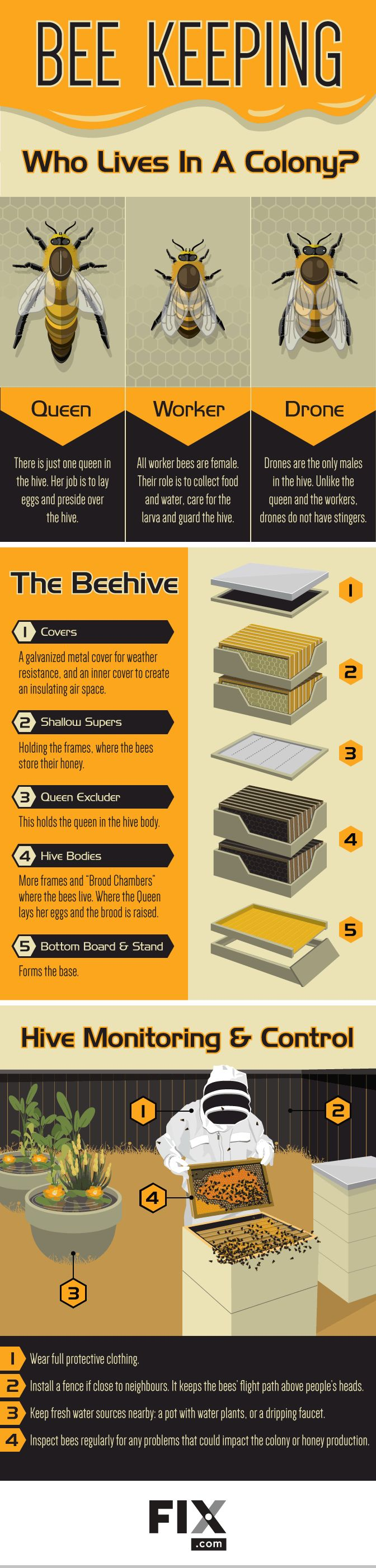 Become a Backyard Beekeeper #Infographic #Gardening                                                                                                                                                                                 More