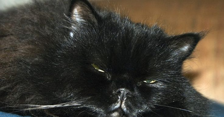 Como fazer almofadas para gatos. Fazer a almofada para seu gato pode ser mais barato que comprar uma. Você pode customizá-la para combinar com sua casa. Uma almofada vai dar ao seu gato uma alternativa confortável que a sua cama ou sofá.