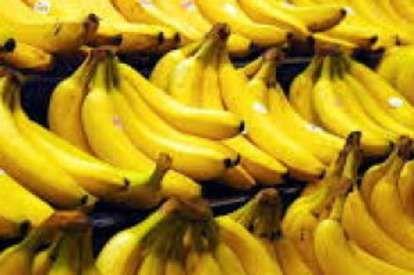 """Allarme in tre continenti per la """"peste"""" delle banane - Repubblica.it Mobile"""