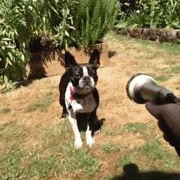 Dog GIF - gifs.ee