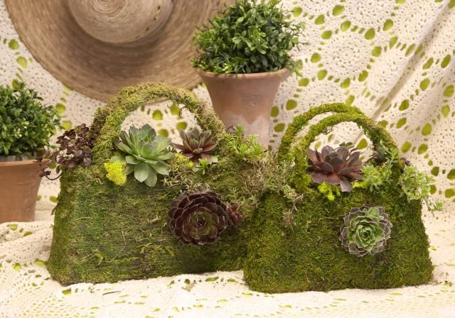 15 Best Images About Succulents I Think I M In Love