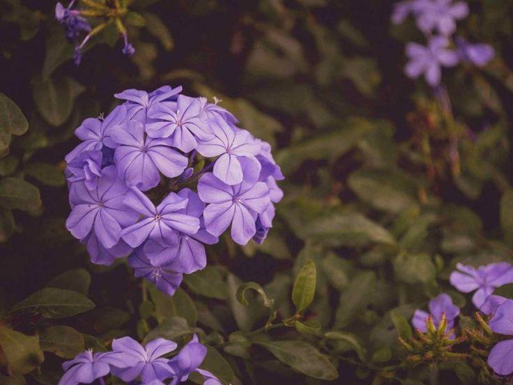 1000+ Ideas About Flower Wallpaper On Pinterest