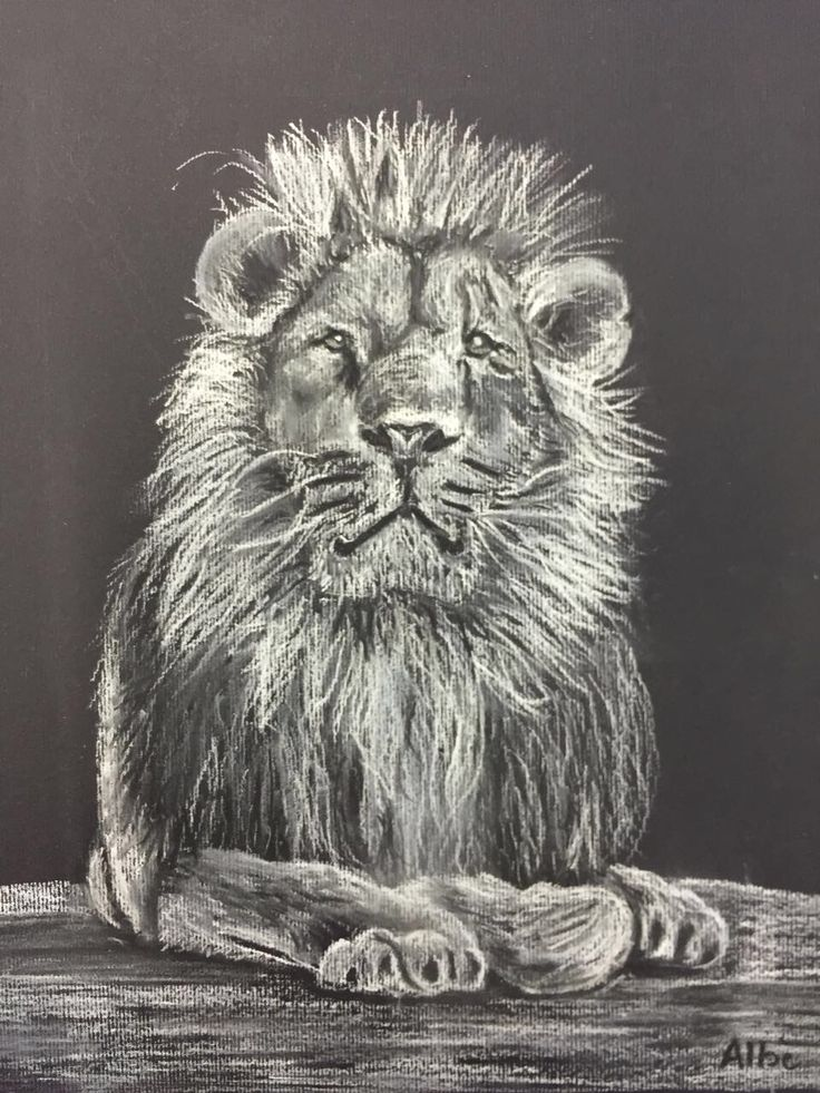 Aslan ~the lion with a golden heart. My first attempt at white chalk on black paper
