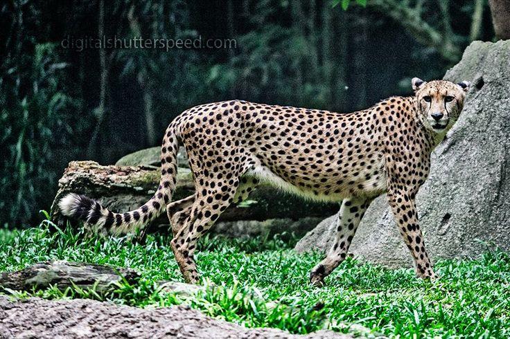 The singpore zoo