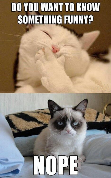 Oh this cat gets me every time!