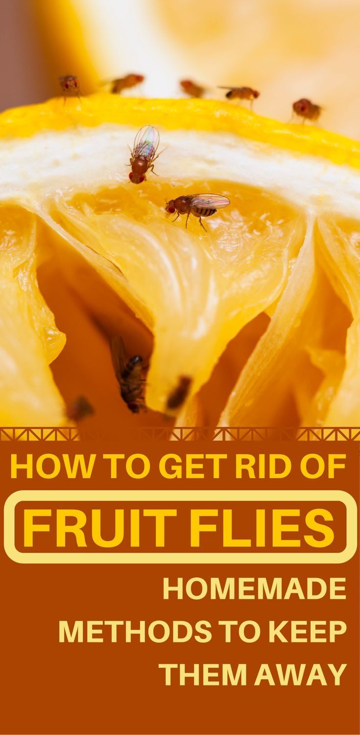 How To Get Rid Of Fruit Flies - Homemade Methods To Keep Them Away