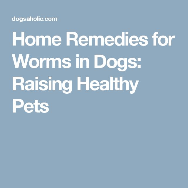 Home Remedies for Worms in Dogs: Raising Healthy Pets