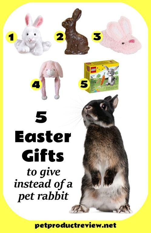 54 best gift ideas for pet parents images on pinterest pet 5 gift ideas to give instead of a pet rabbit for easter negle Image collections