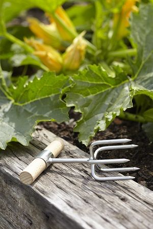 Designed by Sophie Conran, this Twist Cultivator is intended to be both beautiful and functional! - See more at: http://www.theoldpavilion.co.uk/for-garden/greenhouse/s-c-twist-cultivator-gift-boxed.html?#sthash.JwbGdmII.dpuf