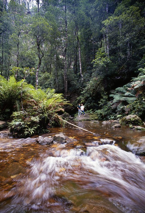Stay in one of the Romantic getaways in Blue Mountains and explore the Botanic Gardens. http://www.ozehols.com.au/holiday-accommodation/new-south-wales/blue-mountains-area #RomanticHolidays #RomanticGetaways #BlueMountains
