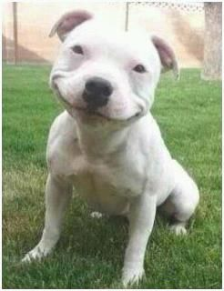 Happy, now that is a smile! PITBULL!!!!!