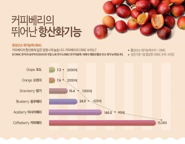 엔잭타 알파카페뉴트라 커피베리커피 항산화커피 : 도전200세클럽 > 200세를위한건강식품