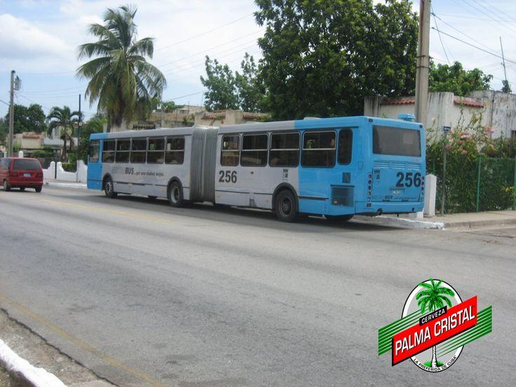 """CERVEZA PALMA CRISTAL TE DICE ¿De dónde viene la palabra GUAGUA? La palabra """"guagua"""" que para los cubanos significa autobús viene del inglés Wa & Wa Co. Inc. Washington, Walton, and Company Incorporated que fue la primera fábrica americana en exportar autobuses a la isla. El logo de Wa & Wa Co., Inc. era una liebre blanca azul y roja, colores de la bandera norteamericana, y estaba en el frente, fondo y lados de todos sus autobuses. www.cervezasdecuba.com"""