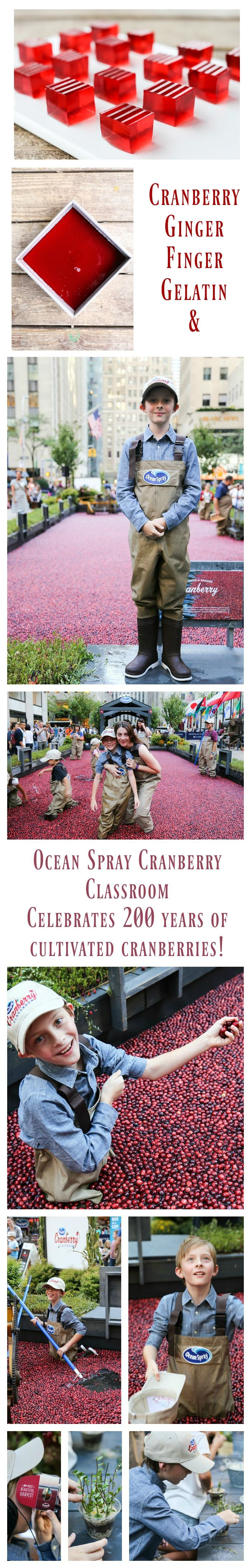Cranberry Ginger Finger Gelatin and celebrating 200 years of cranberry cultivation with Ocean Spray® and the #Cranberryclassroom #ad