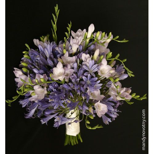 22 best images about agapanthus wedding flowers on
