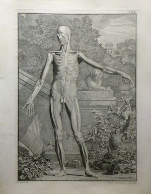 Tab II [View of Muscular System, with Lion Sculpture and Arch] by Louis Philippe Boitard after Jan Wandelaar