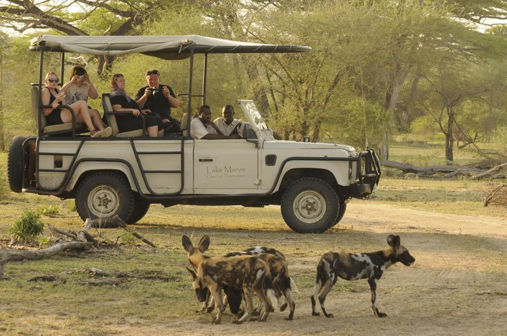 Wild Dogs of Selous Game Reserve, Tanzania