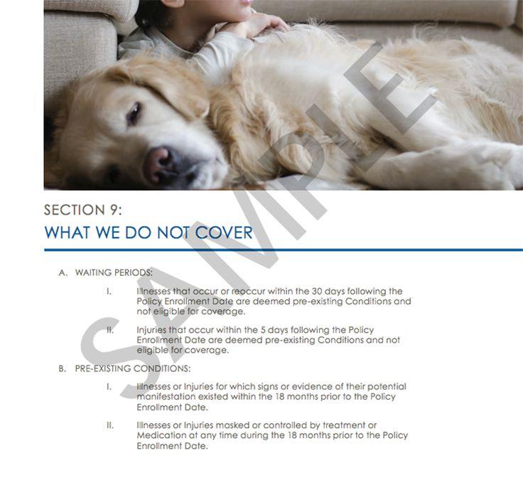 The Best Pet Insurance for 2017 - Reviews.com