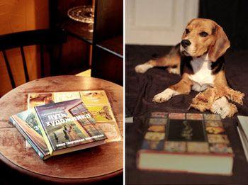 Ульрика 13_u – профессиональный рекламный фотограф. Ее мечта – работать с собаками из приюта, помогать им найти дом и связать это с ее основной работой. Главным…