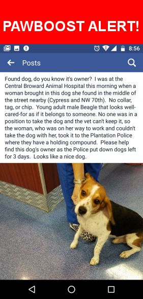Is this your lost pet? Found in Plantation, FL 33317. Please spread the word so we can find the owner!  Brown, black and white Beagle.   It looks young.  Near Cypress Rd & SW 70th, Plantation FL