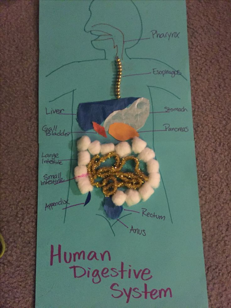 Human Digestive system  Created by random stuff I had laying around the house fo... - http://www.usatimeoffer.com/ApexNutraPalPro/human-digestive-system-created-by-random-stuff-i-had-laying-around-the-house-fo/ #ApexNutraPalPro #ApexNutrapal